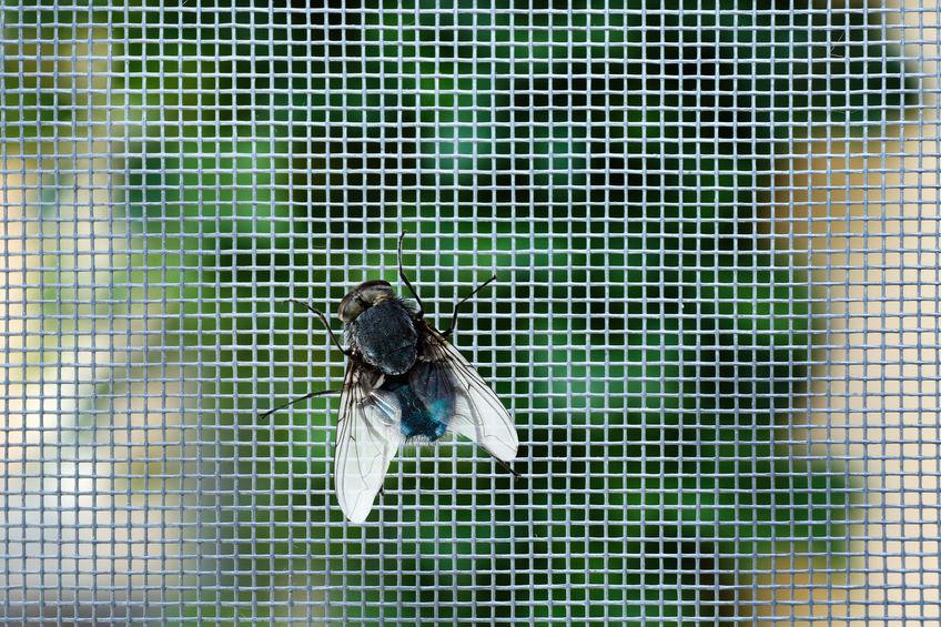 Az irodában is hasznát tudja venni a rolós szúnyoghálóknak!